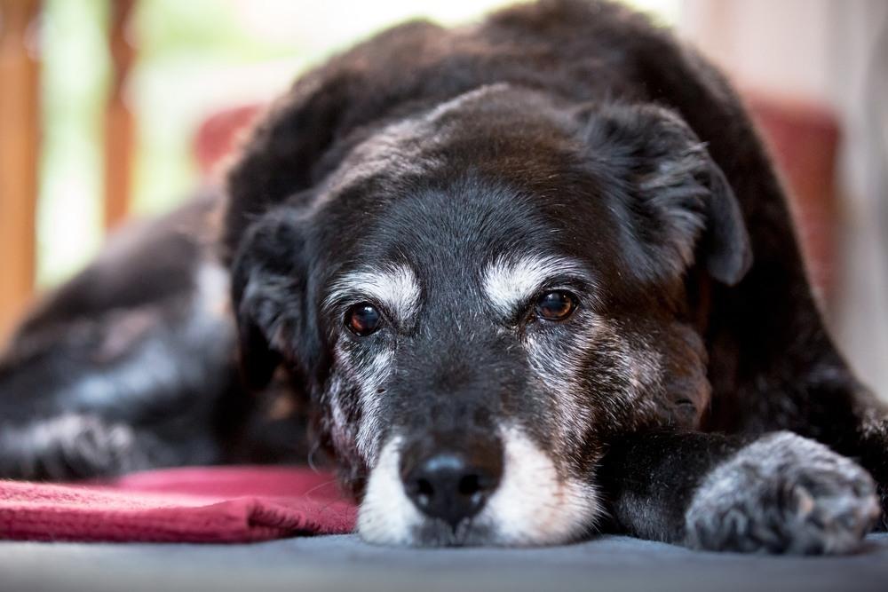 Carta de un perro viejo a su amo
