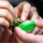 Reportan largas filas durante primer día de venta legal de mariguana en Uruguay