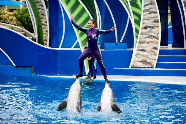 Manifestantes Piden Boicotear A SeaWorld Orlando Este Verano Por Trato A Orcas Y Delfines