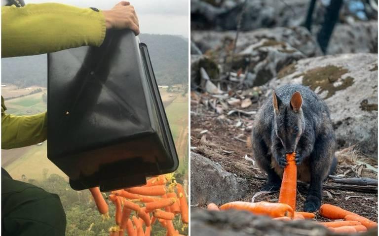 Desde Helicóptero, Lanzan Comida Para Animales Sobrevivientes De Incendios En Australia