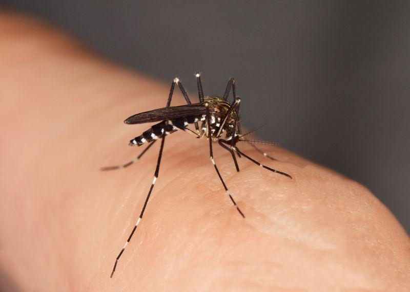 ¿Sabes Por Qué Los Mosquitos Te Siguen Más A Ti?